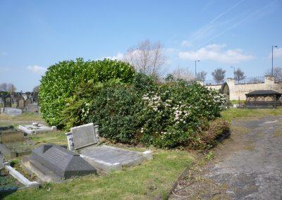 shrubs-1