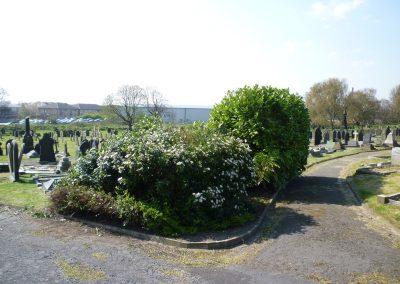 shrubs-2