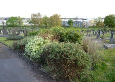 shrubs-3