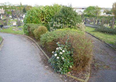 shrubs-4