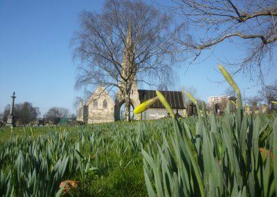 springtime-daffodils